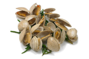 Clams (live)