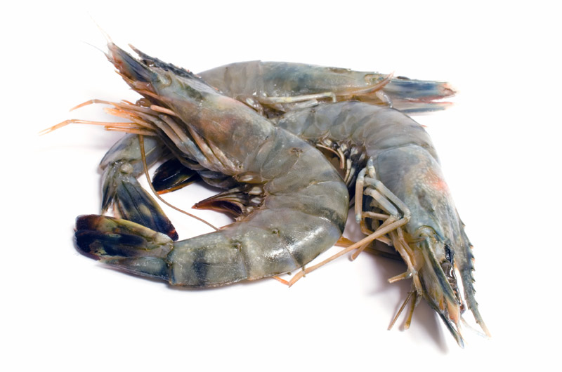 Raw King Prawns