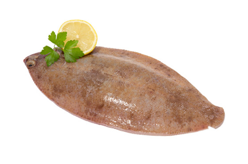 Lemon sole from wing of st mawes cornish fish merchants for Sole fish nutrition
